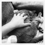 Наш маленький серый котёнок, которому скоро будет 3 года.